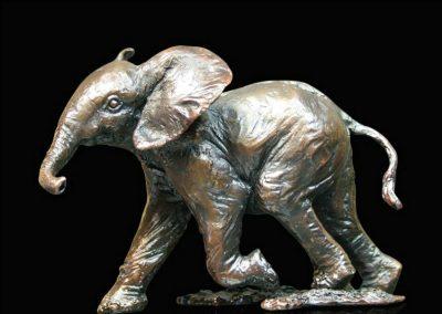 Baby Elephant Running £130