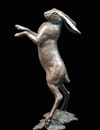 Medium Hare Standing