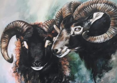 Hilary Barker 2 Soay Rams Canvas Price £82 (Open Edition Print)